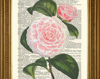 "ROSE / DAHLIA: Pink & Purple Flowers - Antique Dictionary Page Prints, Vintage Art Illustrations (8 x 10"")"