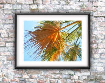 Palm tree, photography, digital download, palm leaf, printable, digital photo, wall decor,  downloadable art,  photo download, home decor,