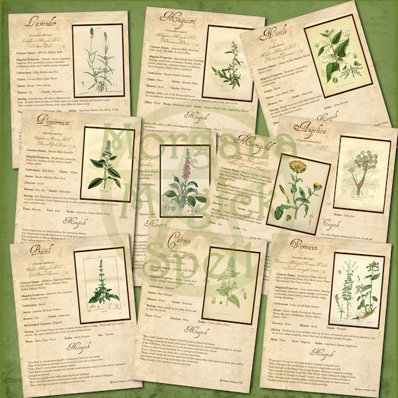 Magick Herbs, 10 Pages Complete Set