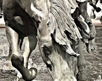 Las Colinas Mustangs 0274