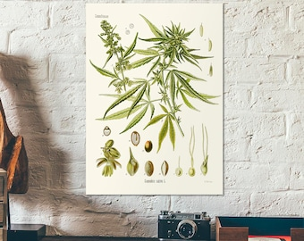 Vintage Botanical Herbal print of the cannabis sativa L. Educational botany chart diagram poster - old Hemp poster - Home decor - retro art
