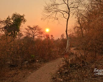"""Sunset Tree Photography, Tree Print, Sunset Photo, Laos, Forest Wall Art, Tree Decor, Travel Photography, Nature Print, """"The Golden Path"""""""