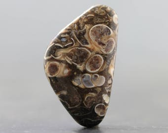 Side Drilled Turritella Fossil Bead (V1716)