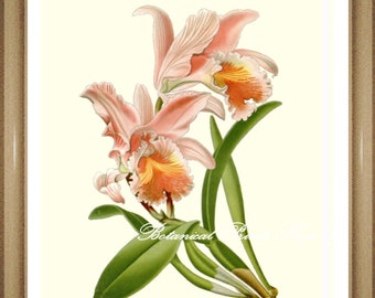 "Orchid Print #8. Botanical Print. Floral Wall Art. Easter Orchid. 5x7"", 8x10"", 11x14"", 13x19"""