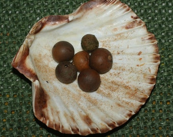 English Oak Galls, Snake Eggs, for Magical Spells, Ink or Charms - Pagan, Wicca, Witchcraft