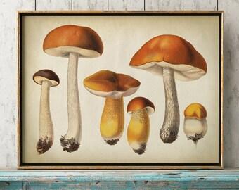 Botanical poster of mushrooms print, botanical print, mushrooms chart, mushrooms poster, fungus print, micology