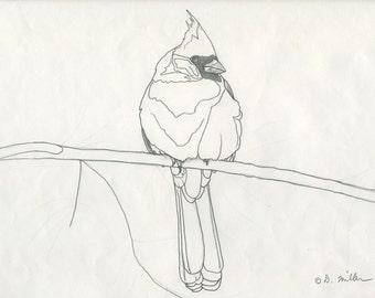 Cardinal Pencil Drawing - Original Wildlife Art