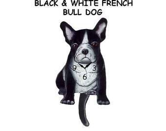black & white french bull dog