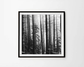 Forest Photography, Trees Photography, Nature Photo, Black and White, Picture, 8x8, 10x10, 12x12, Digital download, Instant Download