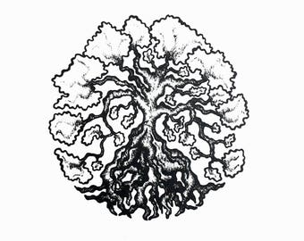 Cotton Tree Pen and Ink Drawing Print