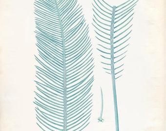 Vintage Zamia Plant Print 8x10 P223