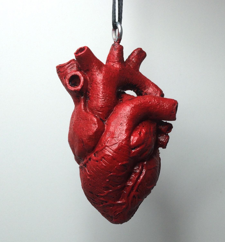 Anatomical human heart ornament zoom ccuart Choice Image