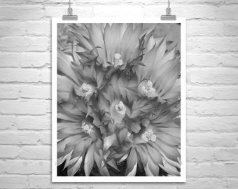 Black and White Flower Photograph, Cactus Flower Art, Wildflower Picture, Desert Cactus Art, Cactus Photography, Flower Art, Arizona Gift