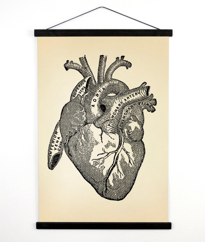Pull Down Chart - Vintage Anatomy Reproduction Print. Human Heart ...