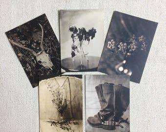 Still Life - Postcards (set of 5)