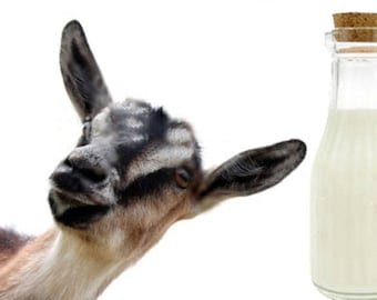 Men's 16 fl oz - GOAT'S MILK LOTION ~ Nourishing Vitamins & Botanical Infused Hand/Body Lotion ~ Deep Absorbing ~ Non- Greasy