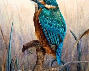 Print - Kingfisher Watercolor Painting by Jacqueline Tribble - Beautiful turquoise bird print, watercolor wildlife, sapphire, giclee print