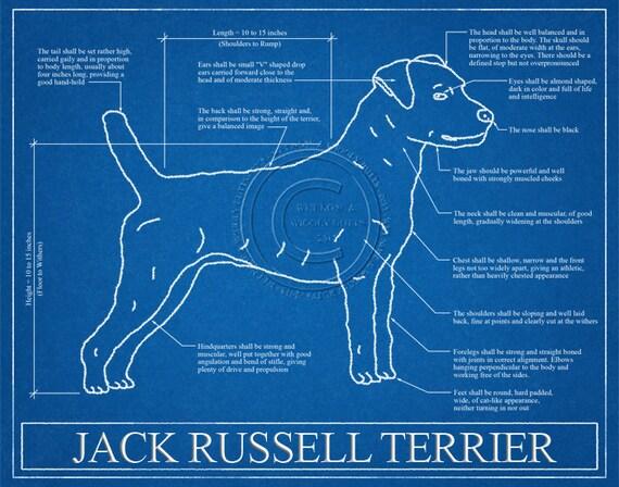Jack russell terrier blueprint elevation jack russell like this item malvernweather Gallery