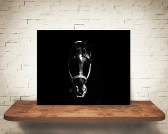 Horse Photograph - Equine Pictures - Fine Art Print - Black White Photography - Home Wall Decor - Wall Art - Farmhouse Decor - Horses