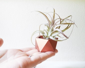 Wedding favor mini planters, geometric air plant holder, copper rose gold