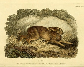 """Antique Woodland Print """"The Hare"""" Sepia Green Forest - Vintage Rabbit Art Print - Animal Forest Fairy Tale Art"""