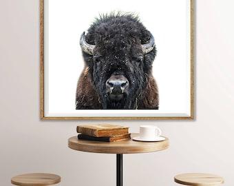 Buffalo Photography, Buffalo Print, Buffalo Nursery, Animal Print, Bison Wall Decor, Bison Print, Woodland Animals, Nursery Art, Buffalo Art