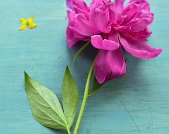 Pink Peony, colorful bright bold art, minimal simple cottage wall art, floral decor, art print, flower photograph, still life art print