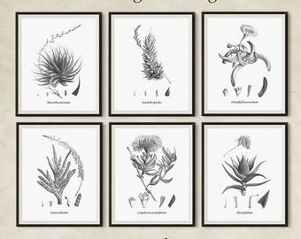 Set of 6 black and white succulent prints instant download, Vintage printable succulents, Black and white botanical prints, 8x10, 11x14, A3