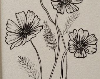 Cosmos Ink Illustration - Original Botanical  illustration - Cosmos Flowers - ink drawing - Scientific drawing - floral illustration
