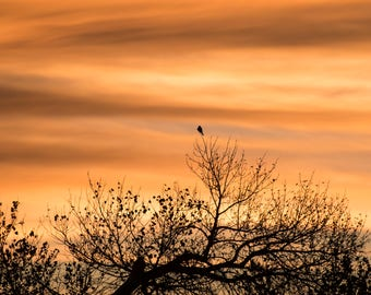 Bosque Del Apache II Photographic Print, landscape, nature, wildlife, birds, sunset