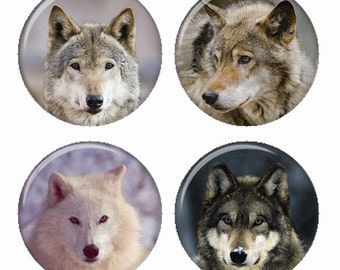 Faces of Wolves Wolf Closeups Magnets or Pinback Buttons or Flatback Medallions Set of 4