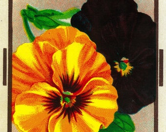 Pansy - Vintage Seed Packet (Art Print - Multiple Sizes Available)