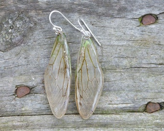 Cicada forewing earrings, wing earrings, cicada jewelry, insect jewelry, real wing, natural jewelry