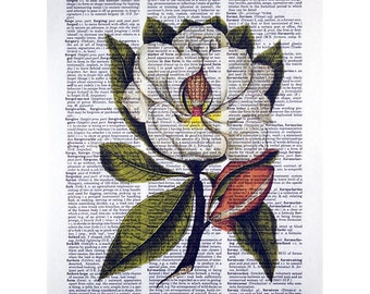 Magnolia Botanical Print on a Vintage Dictionary Page