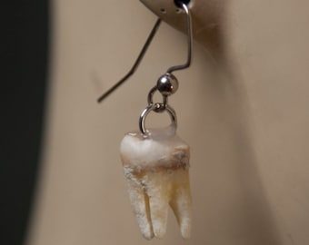 Human Tooth Earrings
