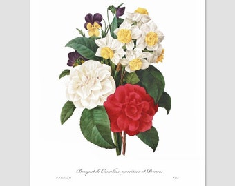 French Country Decor (Camellia Art, Pansy Print, Antique Botanical Home, Kitchen Chic Wall, Red Garden Loft, Bedroom Flower) Pierre Redoute