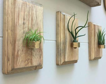 Air plant holders - set of 3