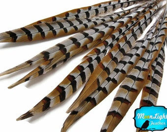 "Pheasant Feathers, 10 Pieces - 14-16"" NATURAL Reeves Venery Pheasant Tail Feathers : 3401"