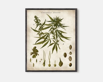 Cannabis sativa poster, Cannabis wall art, room decor, botanical poster, vintage botanical, drugs art, gift idea, cannabis art, cannabis
