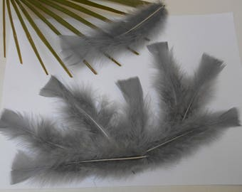 20 gray feathers of different sizes