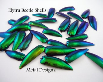 Elytra Beetle Shells - Wings - Pack of 10 - Hand drilled