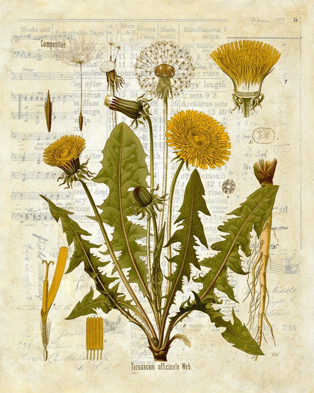 Botanical Vintage Print Dandelion custom choice of print background ...