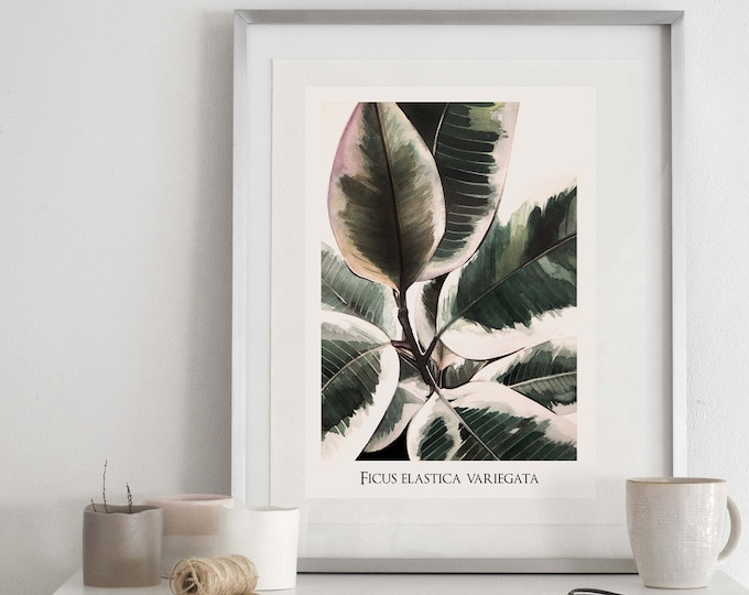 Ficus Elastica Variegata Botanical Print with name
