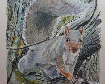"Grey Squirrel , "" I see you """