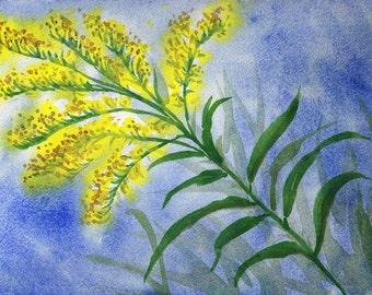 Nebraska Goldenrod, Watercolor Original, State Flower, Yellow