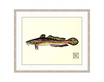 "Burbot 11""x14"" Giclee Print Of A Watercolor Painting For The Freshwater Angler. Bubbot, Freshwater Ling, Cone y Fish, Lingcod, Cusk, Eelpout"
