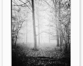 Light Through The Trees, Misty, Limited Edition Print, Black and White, Sizes Available, Trees, Black and White, Print