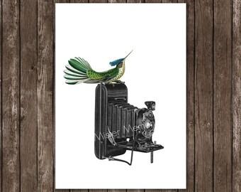 Antike Kamera, Vogel-Drucke, Wohn-Dekor - Paradiesvogel Vogel, hand signierte Kunst