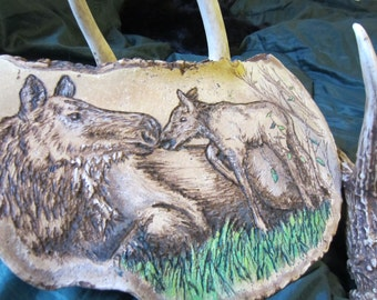 Cow and Calf Moose on Artist Conk