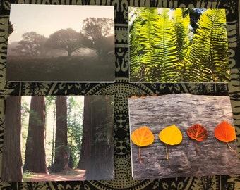 Landscape Blank Note Cards